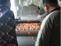 日照大虾微波烘烤设备希朗特价销售
