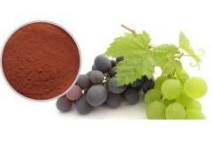 食品级葡萄籽提取物生产厂家