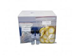 双胍类快筛试剂盒(药品、食品检测) 降血糖供应
