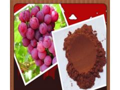 葡萄籽提取物在食品加工中的应用
