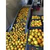 高价求购二手饮料厂设备,乳品厂设备,果蔬生产线