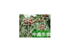 中鑫生物供应山楂提取物 山楂粉