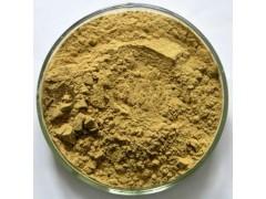 中鑫生物供应桑叶提取物 桑叶粉