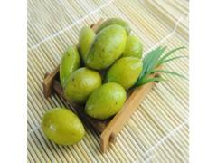 中鑫生物供应青果提取物 橄榄提取物