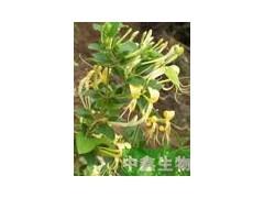 中鑫生物供应金银花提取物 金银花绿原酸  金银花粉