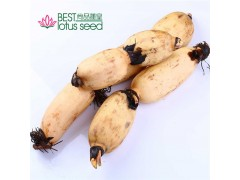 鲜粉莲藕 速冻保鲜冷冻菜藕 高维高营养低热 产地批发供应