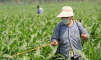农业农村部办公厅关于征求对甲拌磷等4种高毒高风险农药采取禁用措施意见的函 (农办农函〔2018〕17号)