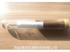 西安博润生物黑蒜提取物5%多酚现货供应
