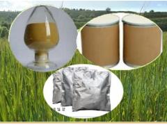 香附提取物 规格10:1 香附子原料萃取