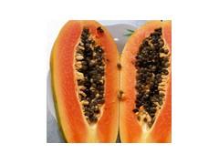 番木瓜籽提取物木瓜籽粉木瓜籽浓缩液木瓜籽速溶粉现货包邮