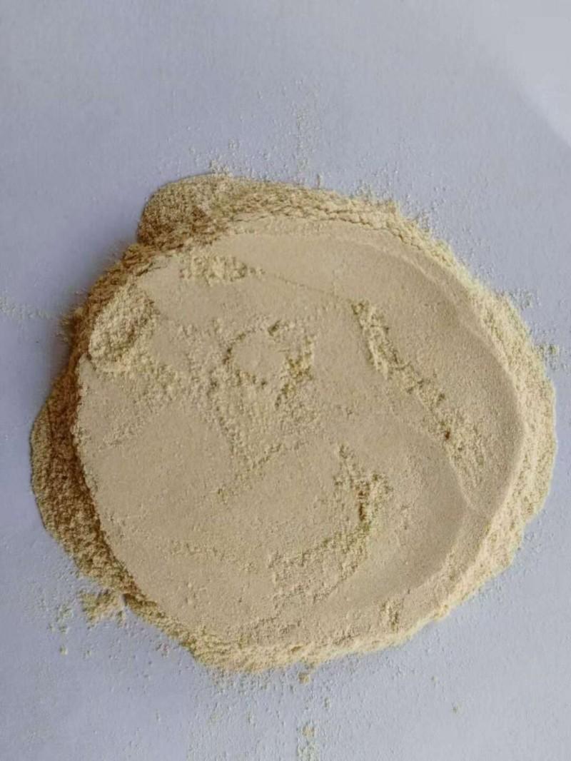 胶质芽孢杆菌--葡萄糖载体