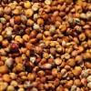 收购大量玉米高粱小麦碎米等3000吨
