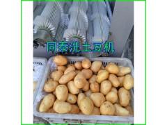 专业土豆清洗机 毛刷清洗机厂家供应