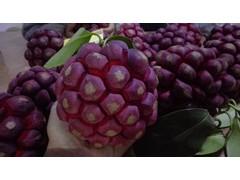 布福娜果种植技术