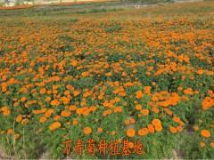 叶黄素5%万寿菊提取物 源头厂家  现货供应