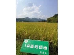 双健生物多功能植物营养液降低农残富硒植物叶面肥有机肥微量元素