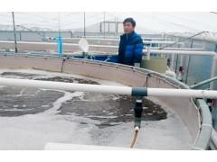 武汉鑫渔圣虹海2号虾政策优势