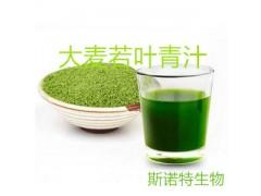 大麦若叶青汁 1.1规格 斯诺特生产