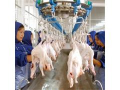 厂家设计生产家禽屠宰流水线