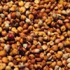 求购大量高粱小麦玉米等