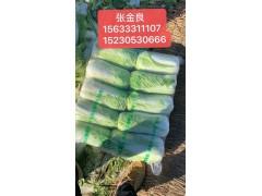 供应玉田甘蓝土豆白菜西瓜冬瓜 玉田万亩蔬菜产区