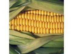 秋之润现货供应食品级增稠剂玉米淀粉 1kg起