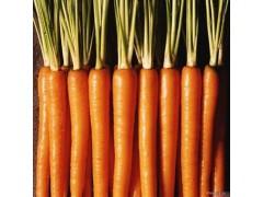 批发供应食品级抗氧化剂β-胡萝卜素