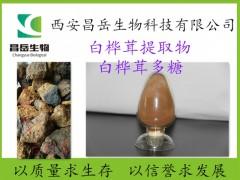 白桦茸提取物 白桦茸多糖30% 桦褐孔菌提取物 源头厂家