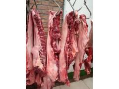 养殖场直供散装现杀活驴生驴肉新鲜细嫩去皮驴肉