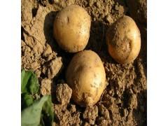 供应食品级马铃薯淀粉