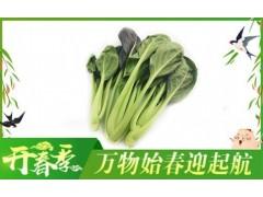 紫冠翠玉-有机蔬菜