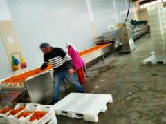 山东科弘是一家专业从事新疆大枣微波烘干杀菌生产线的厂家