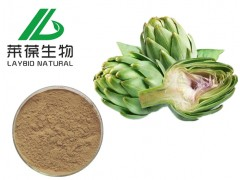 朝鲜蓟提取物 2.5%�D5%  洋蓟酸 保健品中药原料供应