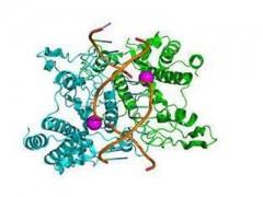 短链脂肪酸检测_脂肪酸含量检测_菲优特检