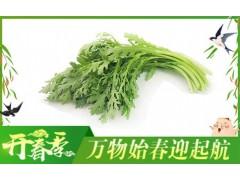小叶茼蒿--——+--+——+有机蔬菜