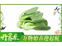 西山青菜-有机蔬菜