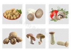 食用菌清洗机 利特洗蘑菇机 蘑菇专用清洗机