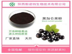 进口黑加仑粉 高倍浓缩提取物 花青素25% 天然抗氧化原料