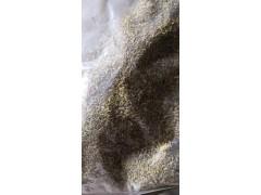 小茴香 Fennel