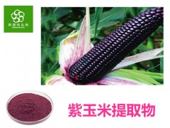 紫玉米提取物 紫玉米粉 99%全水溶 工厂店直销