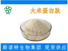 大米蛋白肽 80%活性成分 天然抗氧化剂 小分子肽专业厂家