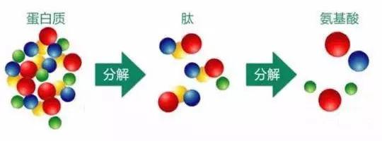 氨基酸小分子