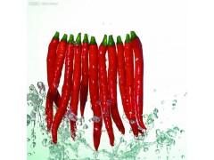 辣椒精 增味剂 调味香料 着色剂 现货