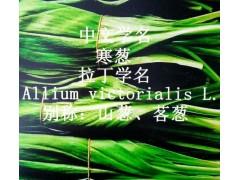 寒葱山野菜供应