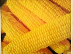 冷冻玉米供应