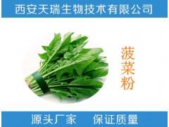 菠菜膳食纤维   菠菜膳食纤维素  天瑞厂家