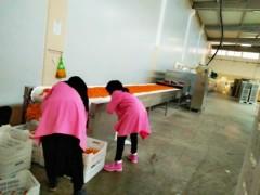 大型坚果红枣食品微波烘干机生产厂家