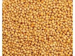 供应俄罗斯产大豆