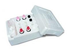果蔬农药残留检测试剂农残仪酶试剂500次  供应