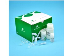 CommaXP 口腔拭子基因组DNA提取试剂盒